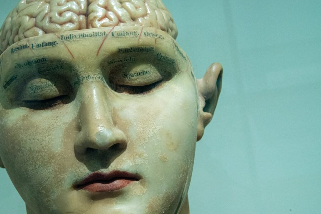 Hersenen - David Matos via Unsplash