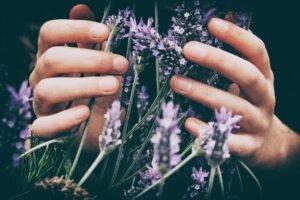 Lavendel - Vero Photoart via Unsplash